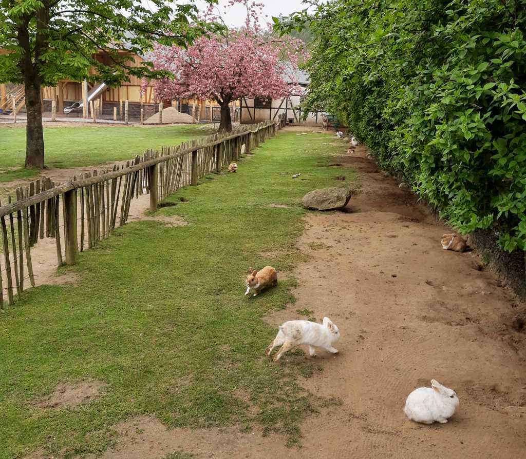 vogelpark marlow kaninchen