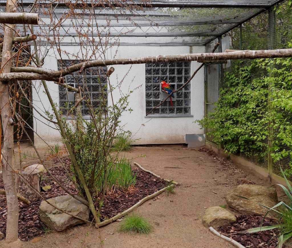 vogelpark marlow papagei