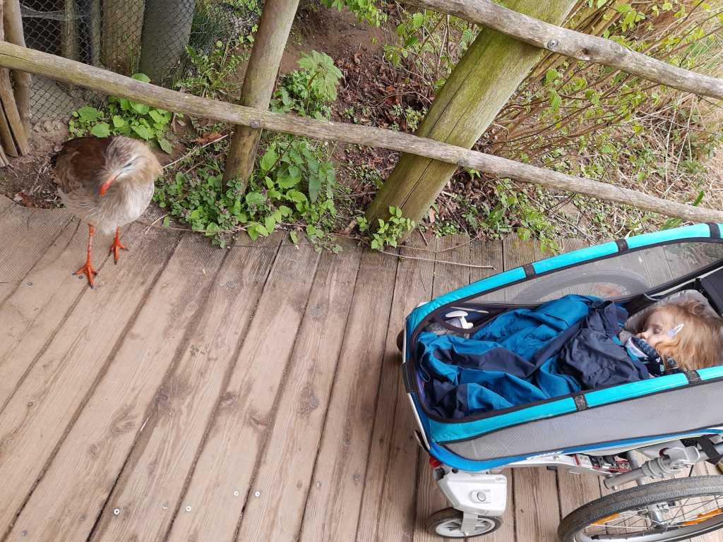 vogelpark marlow vogel ganz nah