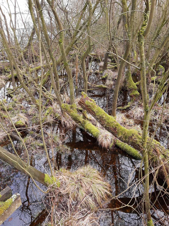 steinhuder meer meerbruch mangroven