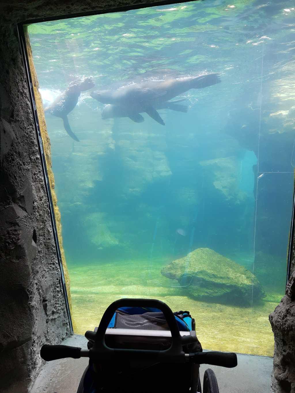 bremerhaven zoo am meer robben
