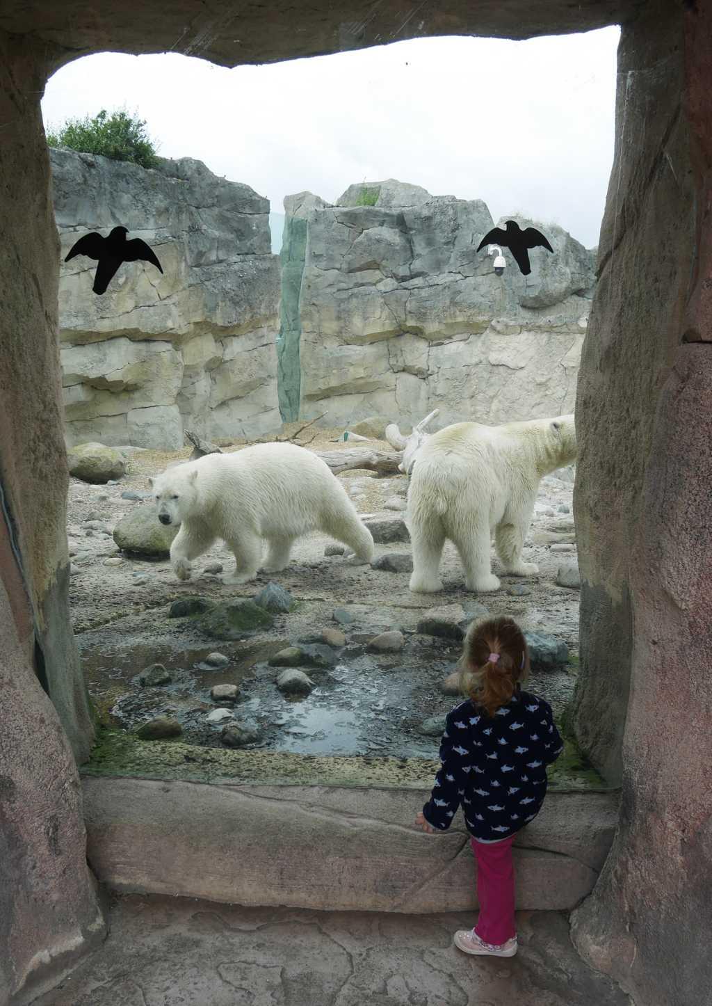bremerhaven zoo eisbären kleinkind