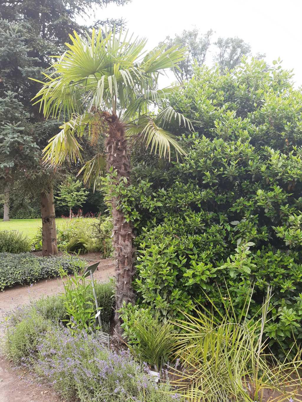 oldenburg botanischer garten palme