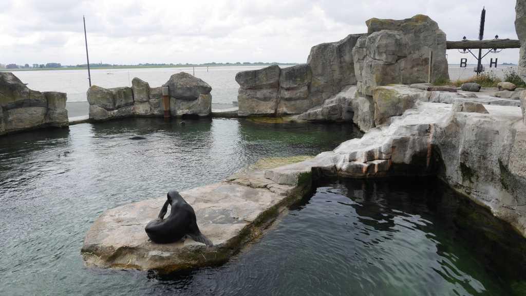 zoo am meer bremerhaven seelöwe